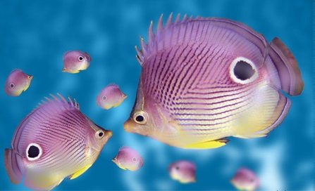 30-SuperPurple-Fish photo